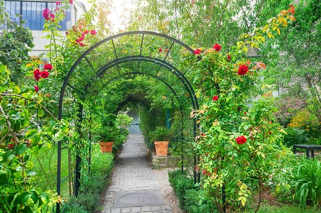 climbing rose arch partial coverage