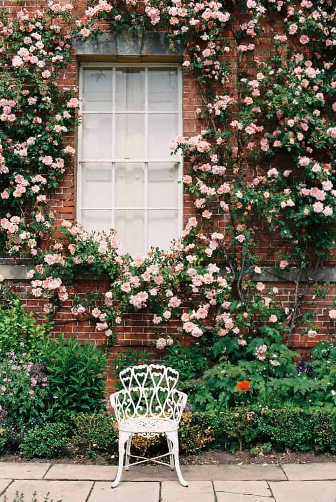 image of roses on brick wall are climbing roses bad for brick?