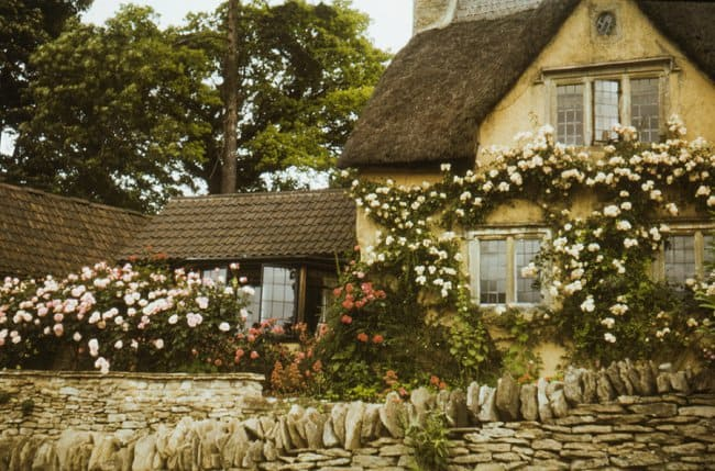 image of cottage walls with climbing roses