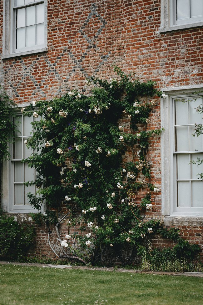 image of climbing rose with tall branches how to overwinter