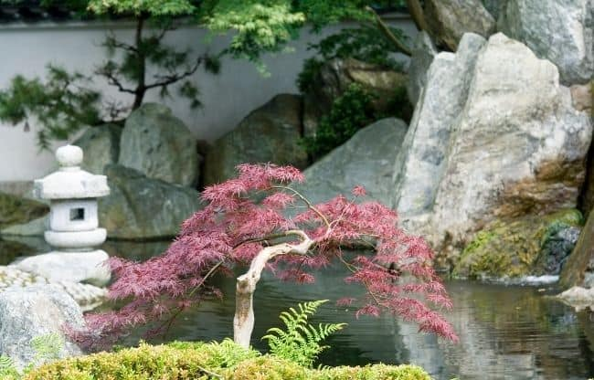image of japanese zen garden for beginners