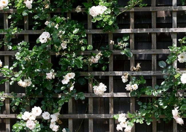 image of square trellis DIY