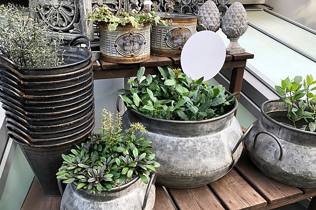 image of iron pans reused as planters