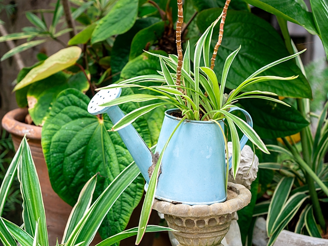 image of watering can household item to use as planter