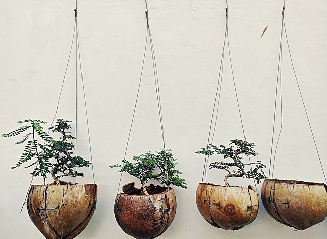image of coconut shell planters