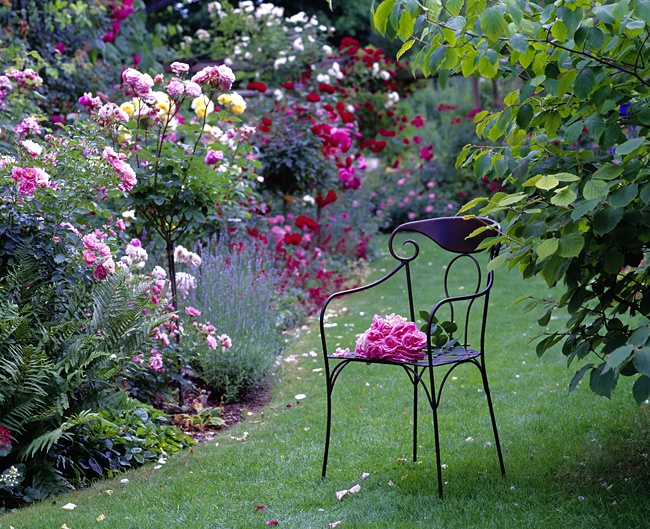 image of chair in rose garden