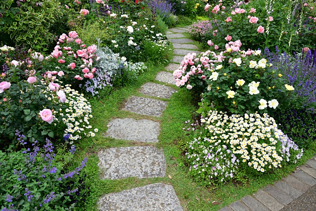 image of plan of a pathway in a small rose garden